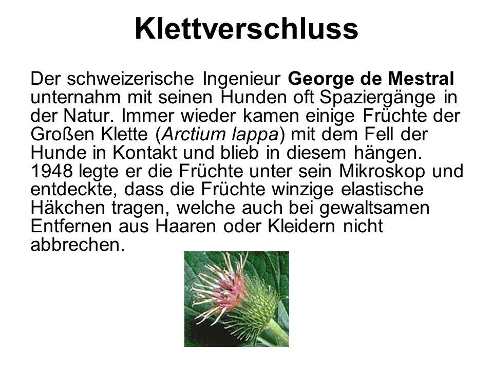 Klettverschluss Der schweizerische Ingenieur George de Mestral unternahm mit seinen Hunden oft Spaziergänge in der Natur. Immer wieder kamen einige Fr