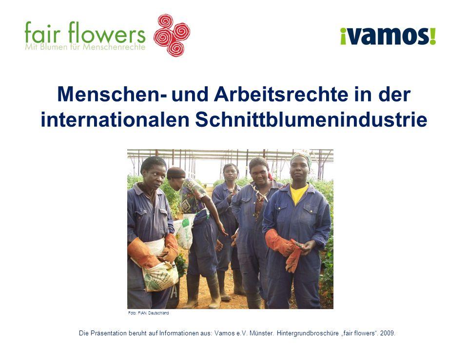 Menschen- und Arbeitsrechte in der internationalen Schnittblumenindustrie Die Präsentation beruht auf Informationen aus: Vamos e.V. Münster. Hintergru
