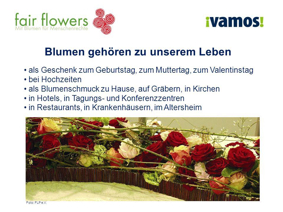 Blumen gehören zu unserem Leben als Geschenk zum Geburtstag, zum Muttertag, zum Valentinstag bei Hochzeiten als Blumenschmuck zu Hause, auf Gräbern, in Kirchen in Hotels, in Tagungs- und Konferenzzentren in Restaurants, in Krankenhäusern, im Altersheim Foto: FLP e.V.