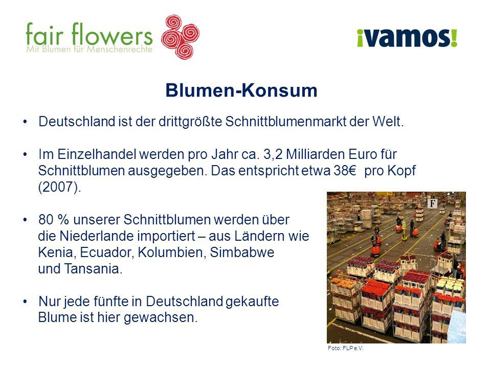 Deutschland ist der drittgrößte Schnittblumenmarkt der Welt. Im Einzelhandel werden pro Jahr ca. 3,2 Milliarden Euro für Schnittblumen ausgegeben. Das