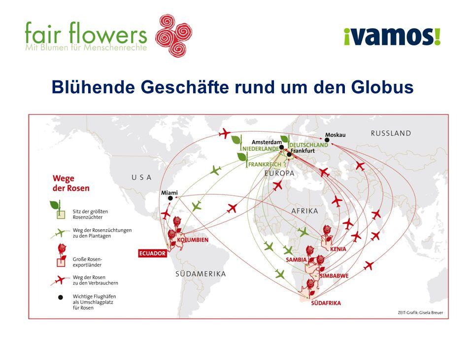 Die Reise einer Rose aus Kenia Montag 7h bis 10h Ernte 8h bis 17h Sortierung nach Länge und Qualität Lagerung in Kühlräumen Dienstag Foto: FLP e.V.