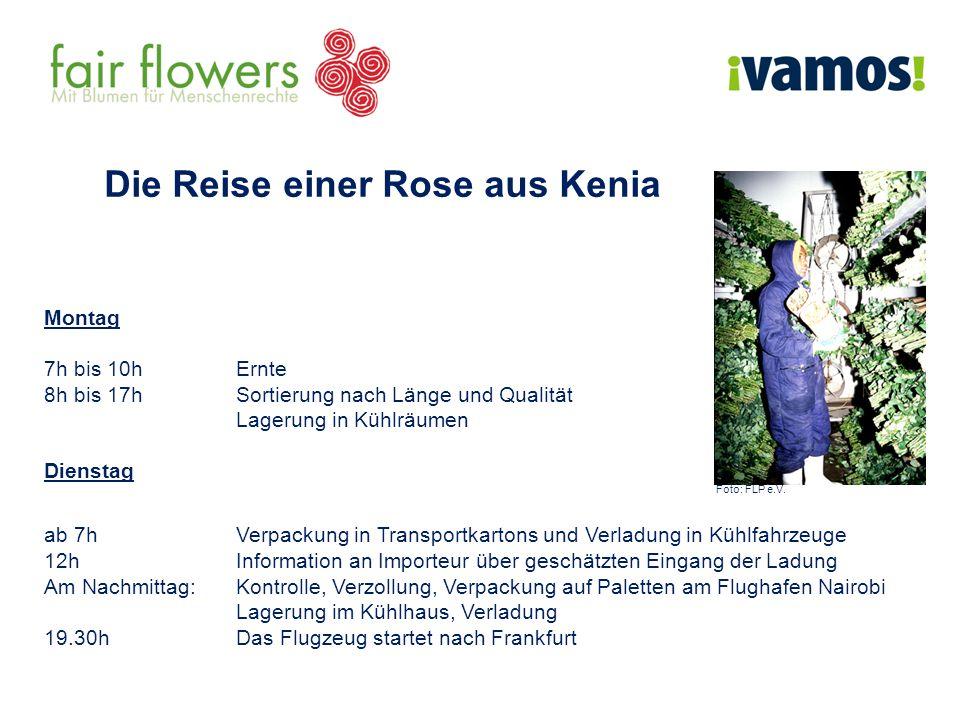 Die Reise einer Rose aus Kenia Montag 7h bis 10h Ernte 8h bis 17h Sortierung nach Länge und Qualität Lagerung in Kühlräumen Dienstag Foto: FLP e.V. ab