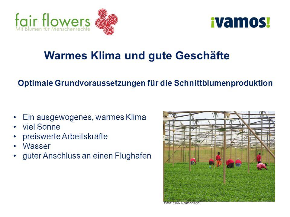 Warmes Klima und gute Geschäfte Optimale Grundvoraussetzungen für die Schnittblumenproduktion Ein ausgewogenes, warmes Klima viel Sonne preiswerte Arb