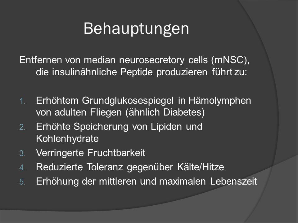 Allgemeine Informationen  IGF Signalweg (IIS) in allen multizellulären Organismen  Erster Ansatz für Theorie in Mäusen durch Deletion des Insulinrezeptors → erhöhte Langlebigkeit  Verschiedene Mutationen in Faktoren des IIS in Drosophila → erhöhter Lebensdauer aber auch zu verspäteter/reduzierter Fruchtbarkeit ► Verlängerte Lebenszeit durch verringerte Insulin Signalling scheinbar konserviert