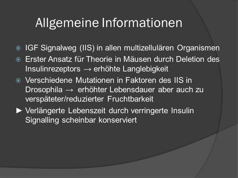 Allgemeine Informationen  IGF Signalweg (IIS) in allen multizellulären Organismen  Erster Ansatz für Theorie in Mäusen durch Deletion des Insulinrez