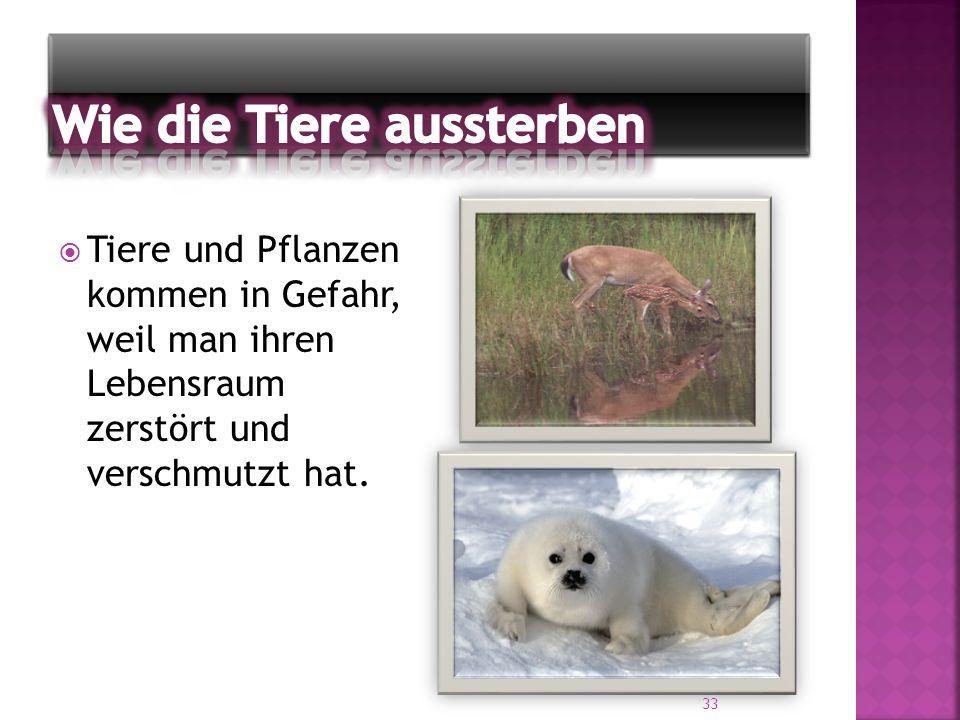  Tiere und Pflanzen kommen in Gefahr, weil man ihren Lebensraum zerstört und verschmutzt hat. 33