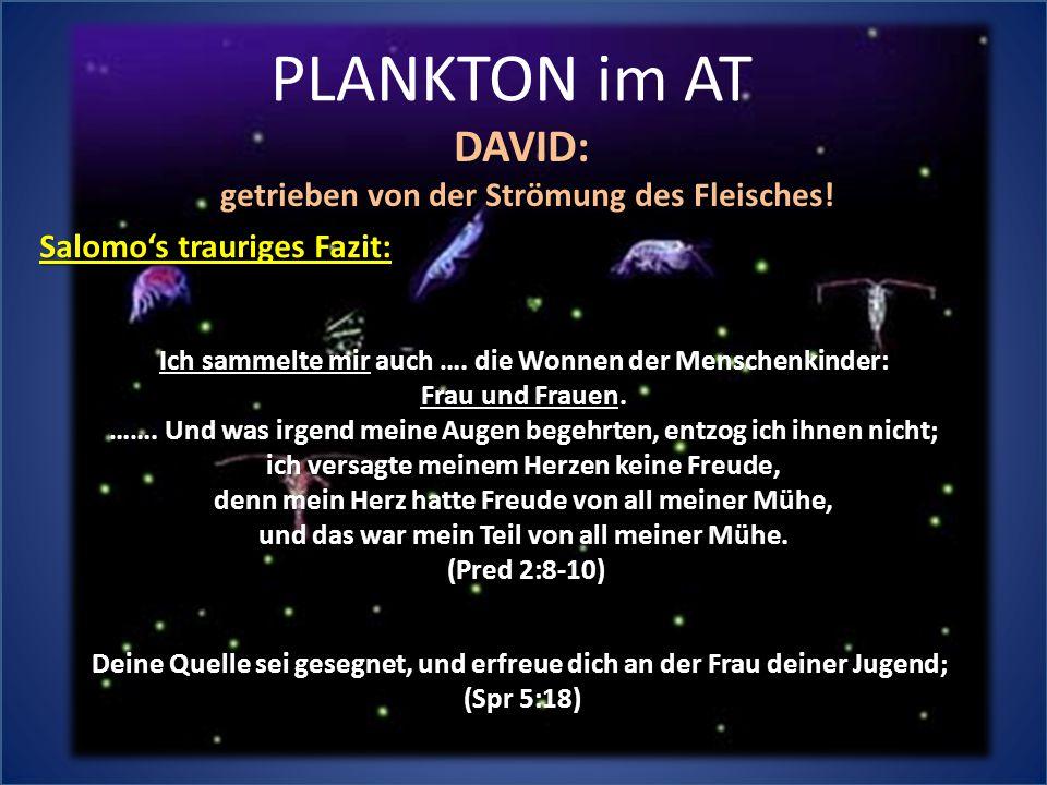 PLANKTON im AT DAVID: getrieben von der Strömung des Fleisches! Deine Quelle sei gesegnet, und erfreue dich an der Frau deiner Jugend; (Spr 5:18) Ich
