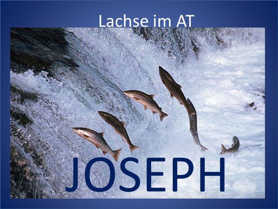 Lachse im AT JOSEPH