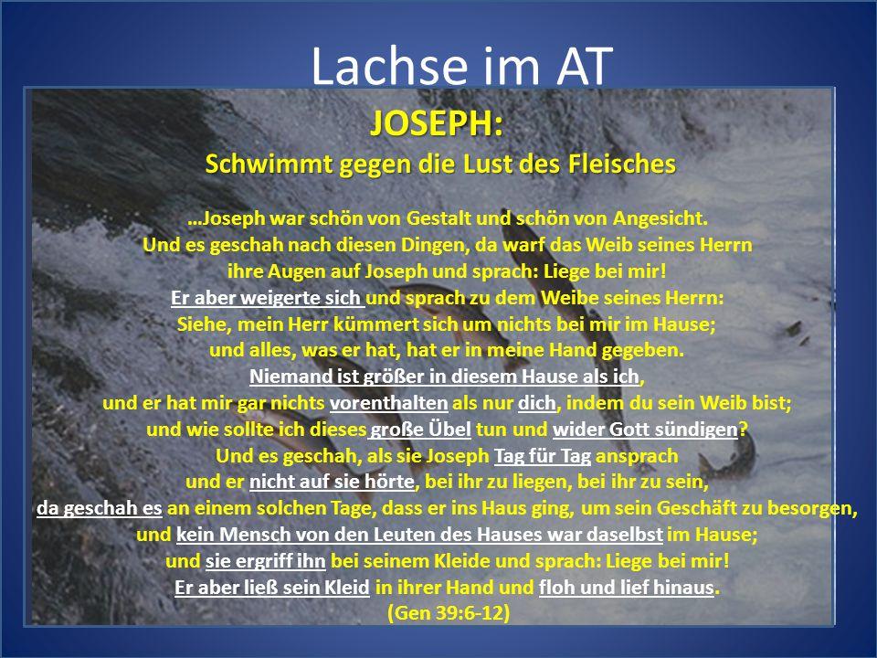 Lachse im AT JOSEPH: Schwimmt gegen die Lust des Fleisches …Joseph war schön von Gestalt und schön von Angesicht. Und es geschah nach diesen Dingen, d