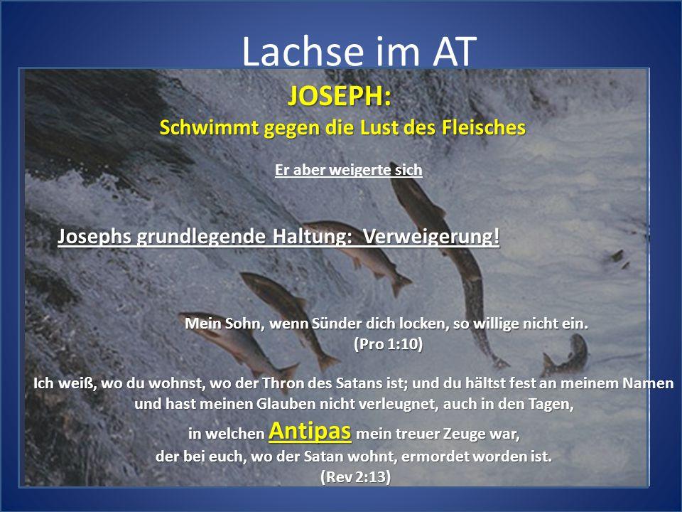 Lachse im AT JOSEPH: Schwimmt gegen die Lust des Fleisches Er aber weigerte sich Josephs grundlegende Haltung: Verweigerung! Mein Sohn, wenn Sünder di