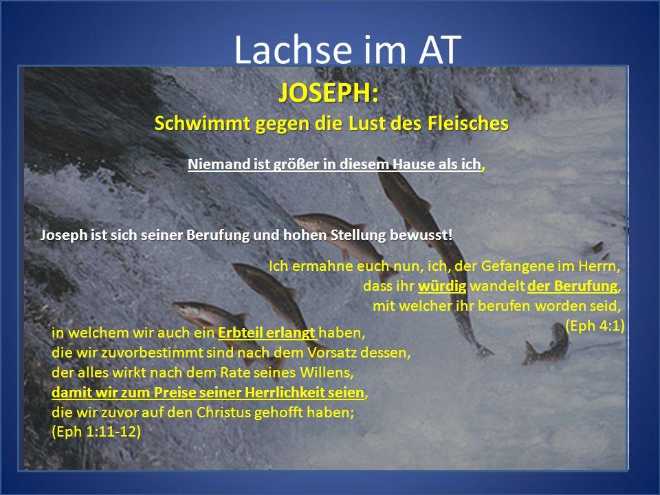 Lachse im AT JOSEPH: Schwimmt gegen die Lust des Fleisches Niemand ist größer in diesem Hause als ich, Joseph ist sich seiner Berufung und hohen Stellung bewusst.