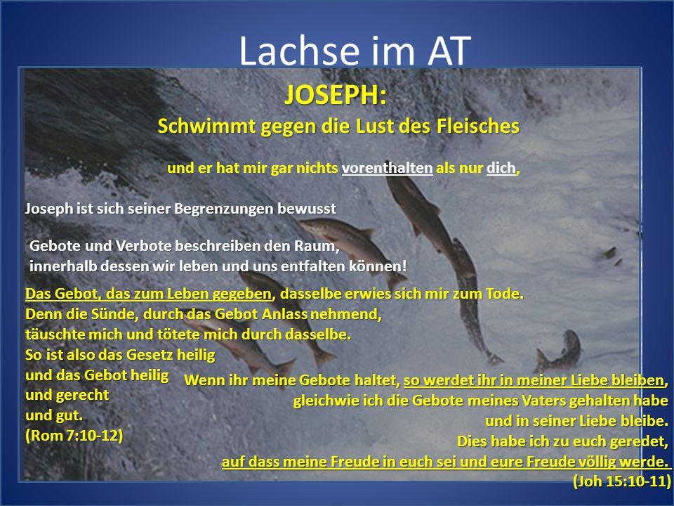 Lachse im AT JOSEPH: Schwimmt gegen die Lust des Fleisches und er hat mir gar nichts vorenthalten als nur dich, Joseph ist sich seiner Begrenzungen be