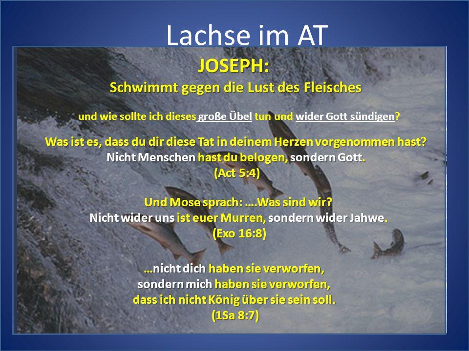 Lachse im AT JOSEPH: Schwimmt gegen die Lust des Fleisches und wie sollte ich dieses große Übel tun und wider Gott sündigen.