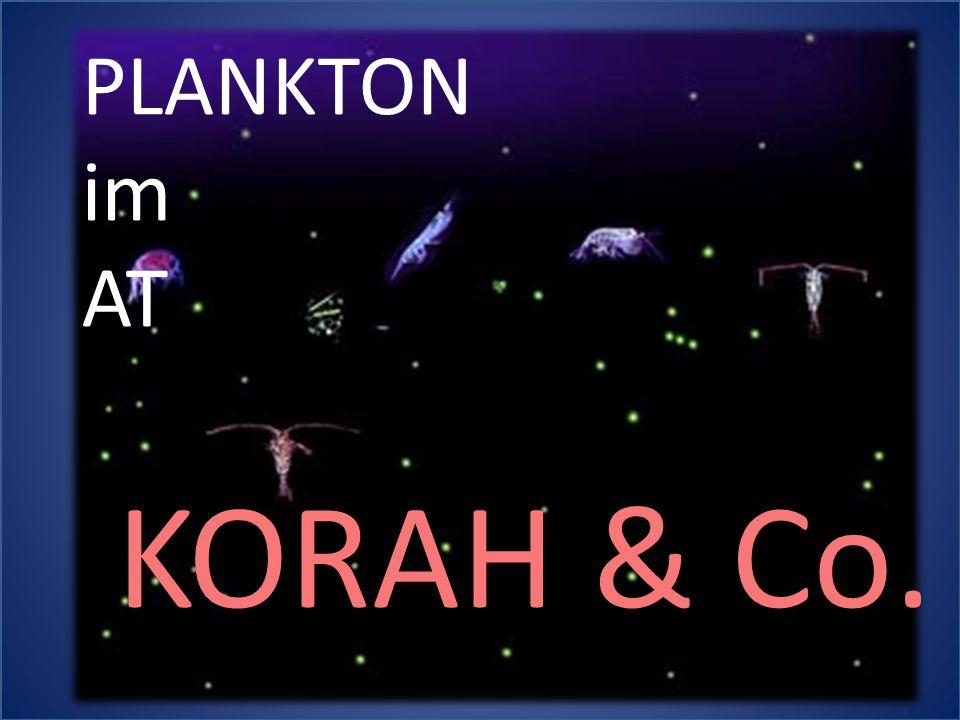 PLANKTON im AT KORAH & Co.