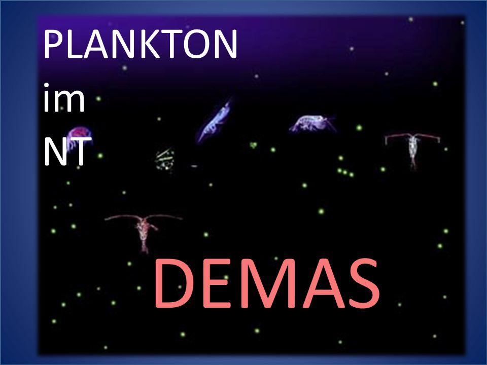 PLANKTON im NT DEMAS