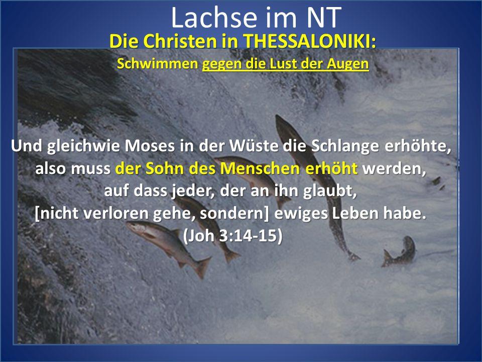 Lachse im NT Die Christen in THESSALONIKI: Schwimmen gegen die Lust der Augen Und gleichwie Moses in der Wüste die Schlange erhöhte, also muss der Soh