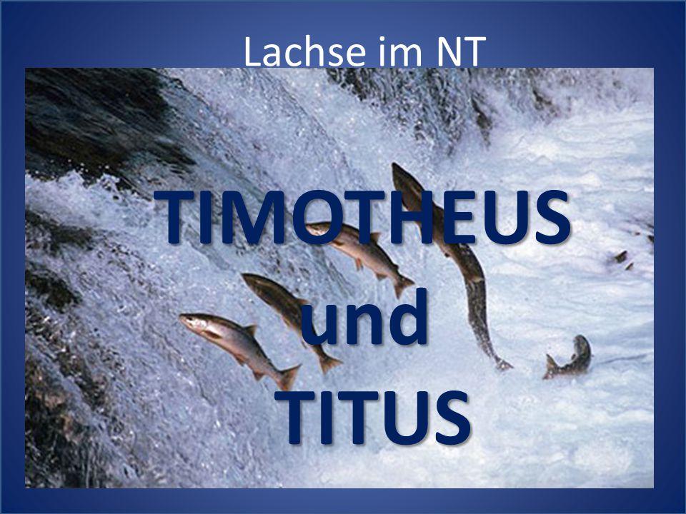 Lachse im NT TIMOTHEUSundTITUS