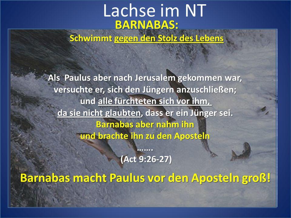 Lachse im NT BARNABAS: Schwimmt gegen den Stolz des Lebens Als Paulus aber nach Jerusalem gekommen war, versuchte er, sich den Jüngern anzuschließen;