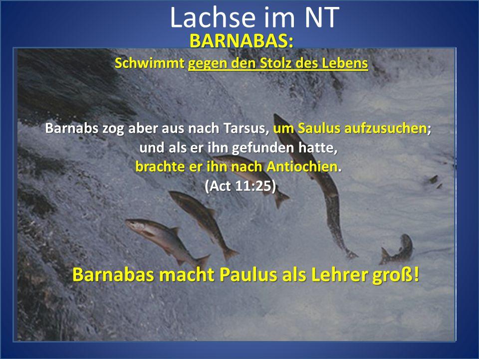 Lachse im NT BARNABAS: Schwimmt gegen den Stolz des Lebens Barnabs zog aber aus nach Tarsus, um Saulus aufzusuchen; und als er ihn gefunden hatte, brachte er ihn nach Antiochien.