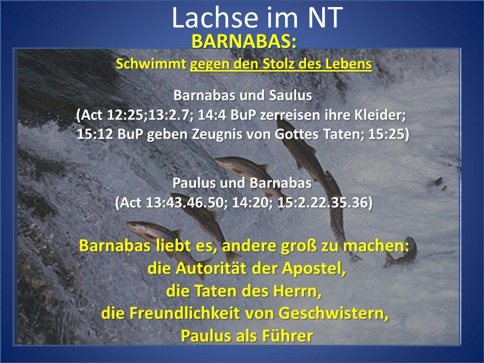Lachse im NT BARNABAS: Schwimmt gegen den Stolz des Lebens Barnabas und Saulus (Act 12:25;13:2.7; 14:4 BuP zerreisen ihre Kleider; 15:12 BuP geben Zeugnis von Gottes Taten; 15:25) Paulus und Barnabas (Act 13:43.46.50; 14:20; 15:2.22.35.36) Barnabas liebt es, andere groß zu machen: die Autorität der Apostel, die Taten des Herrn, die Freundlichkeit von Geschwistern, Paulus als Führer