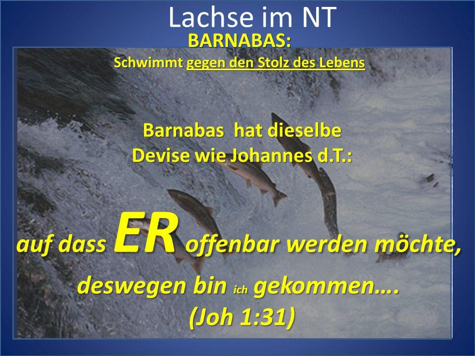 Lachse im NT BARNABAS: Schwimmt gegen den Stolz des Lebens Barnabas hat dieselbe Devise wie Johannes d.T.: auf dass ER offenbar werden möchte, deswegen bin ich gekommen….