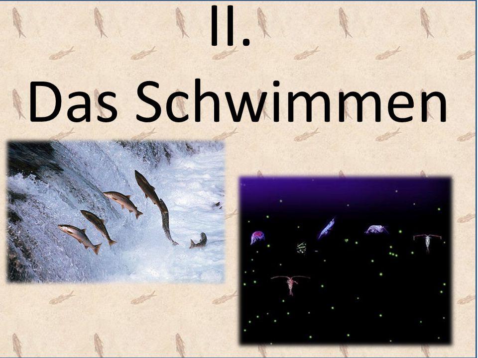 """Lachse im NT TIMOTHEUS und TITUS: Schwimmen gegen die Lust des Fleisches Das Gewissen: συνείδησις""""Zusammen-sehen , d.h."""