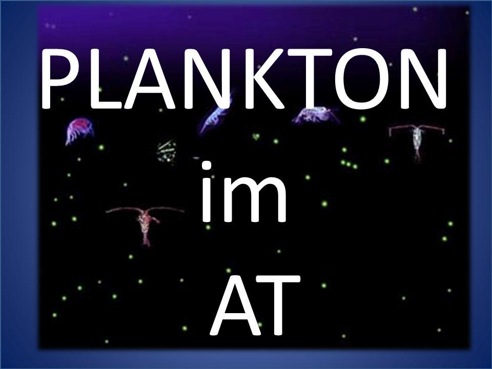 PLANKTON im AT