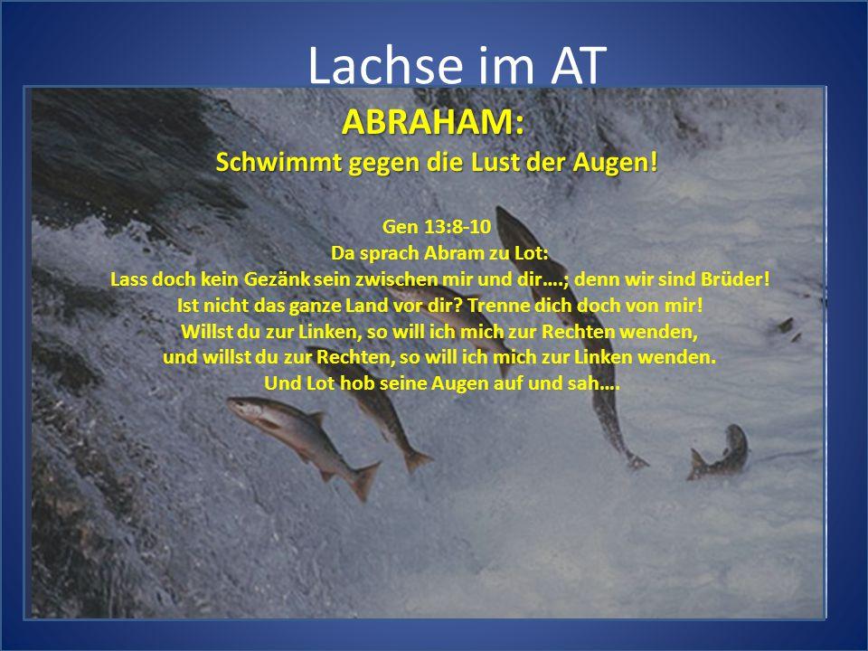 Lachse im AT ABRAHAM: Schwimmt gegen die Lust der Augen! Gen 13:8-10 Da sprach Abram zu Lot: Lass doch kein Gezänk sein zwischen mir und dir….; denn w