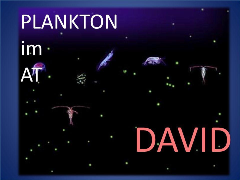 PLANKTON im AT DAVID