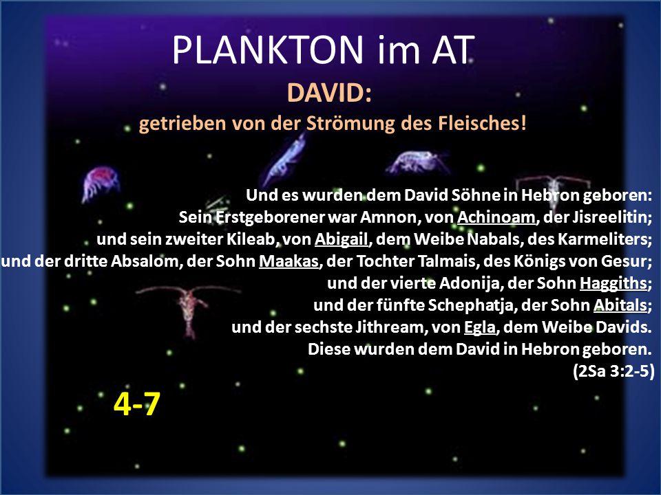 PLANKTON im AT Und es wurden dem David Söhne in Hebron geboren: Achinoam Sein Erstgeborener war Amnon, von Achinoam, der Jisreelitin; Abigail und sein zweiter Kileab, von Abigail, dem Weibe Nabals, des Karmeliters; Maakas und der dritte Absalom, der Sohn Maakas, der Tochter Talmais, des Königs von Gesur; Haggiths und der vierte Adonija, der Sohn Haggiths; Abitals und der fünfte Schephatja, der Sohn Abitals; Egla und der sechste Jithream, von Egla, dem Weibe Davids.