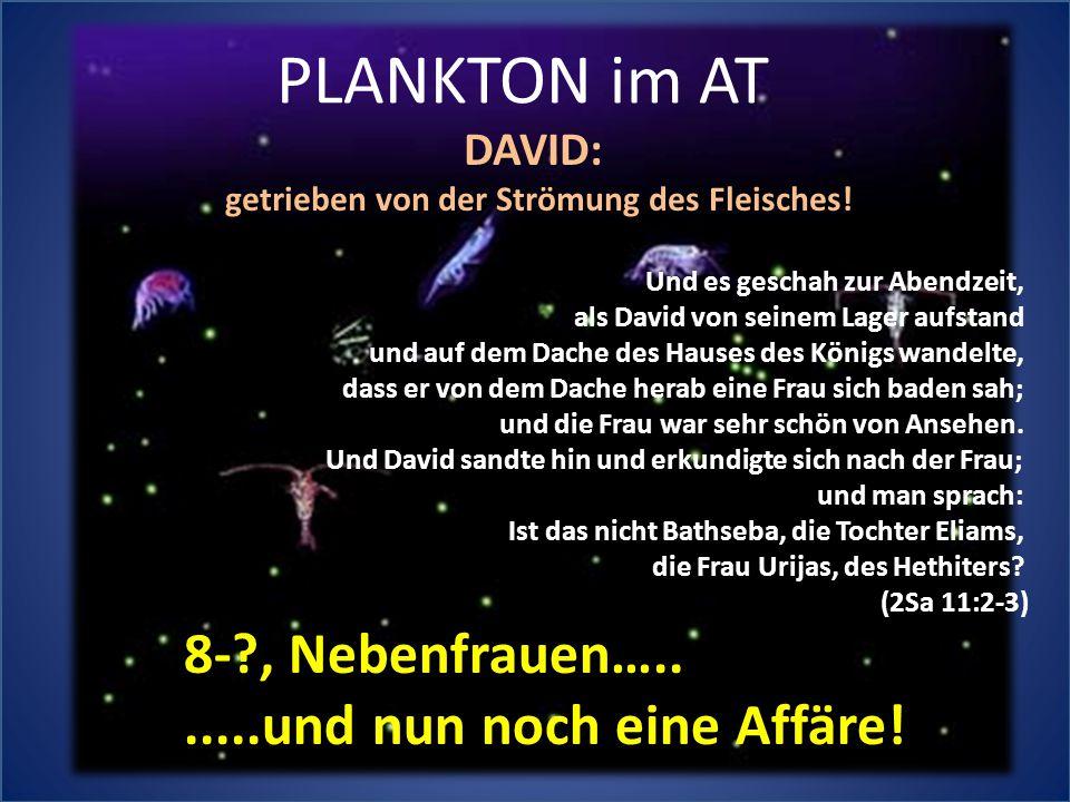 PLANKTON im AT Und es geschah zur Abendzeit, als David von seinem Lager aufstand und auf dem Dache des Hauses des Königs wandelte, dass er von dem Dac