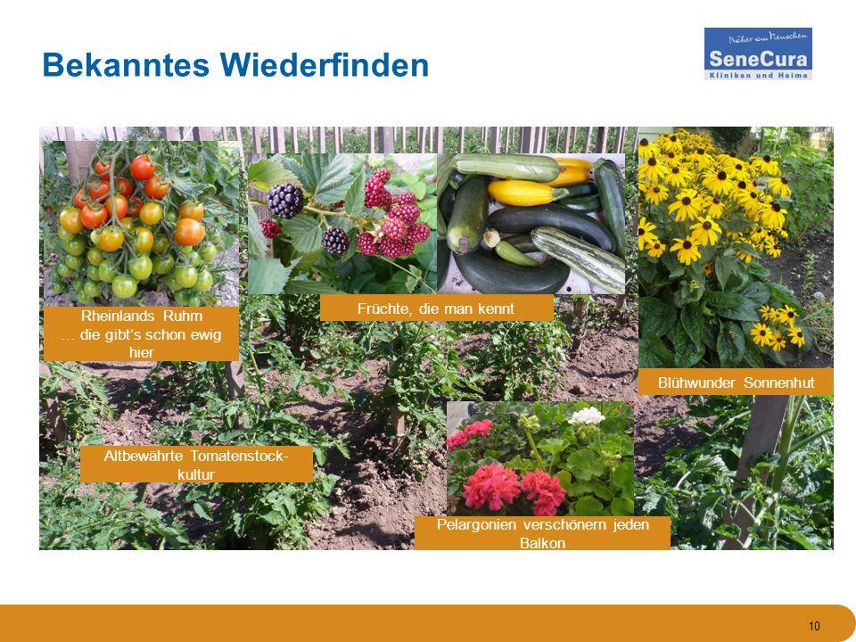 Altbewährte Tomatenstock- kultur Rheinlands Ruhm … die gibt's schon ewig hier Blühwunder Sonnenhut Früchte, die man kennt Pelargonien verschönern jeden Balkon 10 Bekanntes Wiederfinden