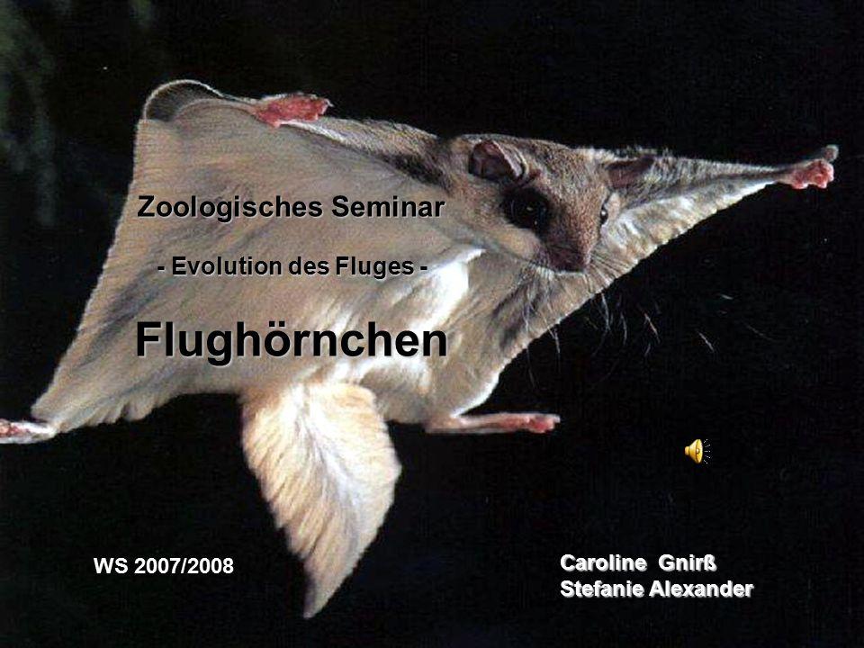 Caroline Gnirß Stefanie Alexander WS 2007/2008 Zoologisches Seminar - Evolution des Fluges - Flughörnchen