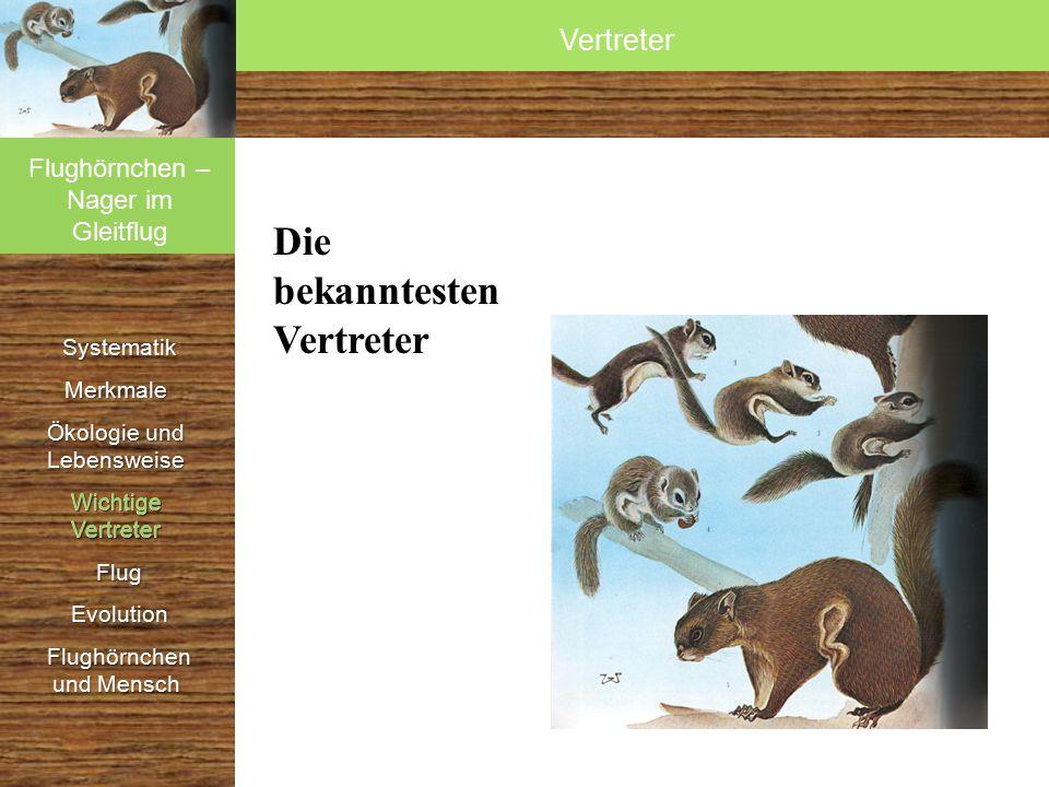 Systematik SystematikMerkmale Ökologie und Lebensweise Wichtige Vertreter Flug Flug Evolution Evolution Flughörnchen und Mensch Flughörnchen und Mensc