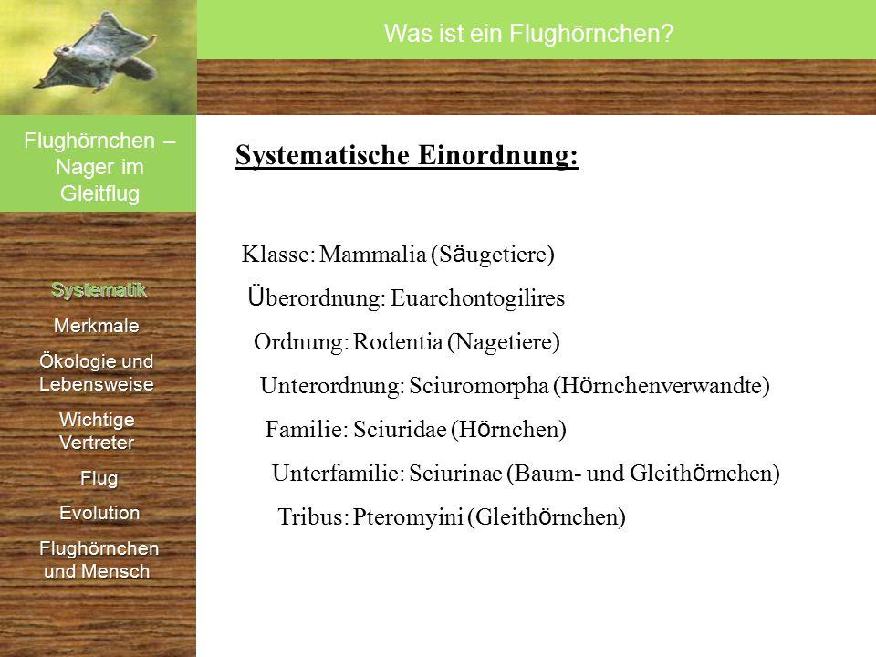 Systematik SystematikMerkmale Ökologie und Lebensweise Wichtige Vertreter Flug Flug Evolution Evolution Flughörnchen und Mensch Flughörnchen und Mensch 4 Hypothesen ü ber die Artentstehung von Flugh ö rnchen 1.