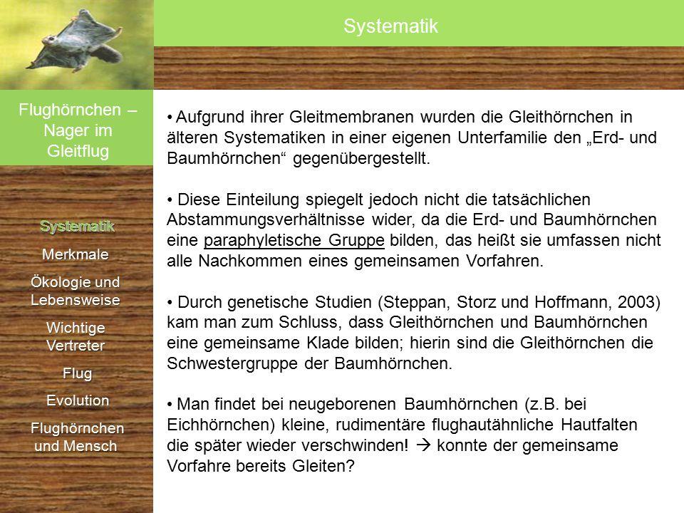 Systematik SystematikMerkmale Ökologie und Lebensweise Wichtige Vertreter Flug Flug Evolution Evolution Flughörnchen und Mensch Flughörnchen und Mensch Interne Systematik Die folgenden rezenten Gattungen werden unterschieden:  Riesengleithörnchen (Petaurista)  Namdapha-Gleithörnchen (Biswamoyopterus)  Schwarze Gleithörnchen (Aeromys)  Felsgleithörnchen (Eupetaurus)  Echte Gleithörnchen (Pteromys)  Neuweltliche Gleithörnchen (Glaucomys)  Kaschmir-Gleithörnchen (Eoglaucomys)  Pfeilschwanz-Gleithörnchen (Hylopetes)  Zwerggleithörnchen (Petinomys)  Furchenzahn-Gleithörnchen (Aeretes)  Komplexzahn-Gleithörnchen (Trogopterus)  Haarfuß-Gleithörnchen (Belomys)  Rauchgraues Gleithörnchen (Pteromyscus)  Kleinstgleithörnchen (Petaurillus)  Horsfield-Gleithörnchen (Iomys) Flughörnchen – Nager im Gleitflug Systematik Systematik