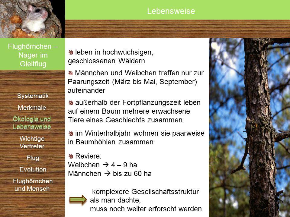 Systematik SystematikMerkmale Ökologie und Lebensweise Wichtige Vertreter Flug Flug Evolution Evolution Flughörnchen und Mensch Flughörnchen und Mensch Bernhard Grzimek: Grzimeks Tierleben.