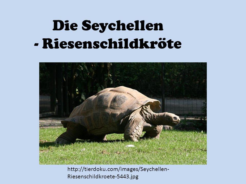 Die Seychellen - Riesenschildkröte http://tierdoku.com/images/Seychellen- Riesenschildkroete-5443.jpg
