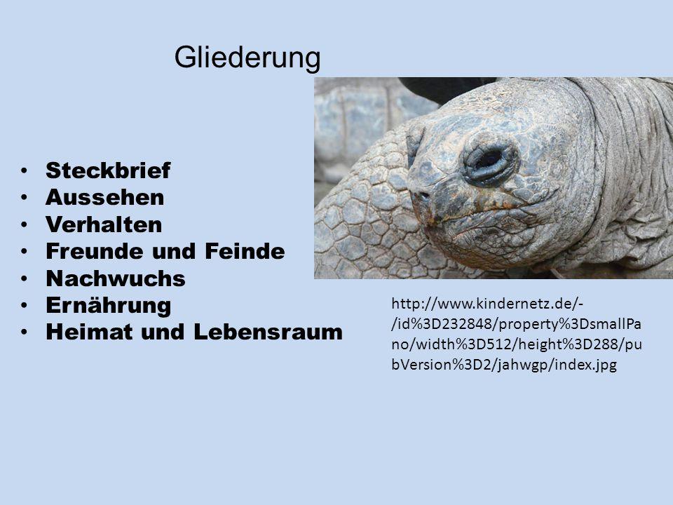 Gliederung Steckbrief Aussehen Verhalten Freunde und Feinde Nachwuchs Ernährung Heimat und Lebensraum http://www.kindernetz.de/- /id%3D232848/property