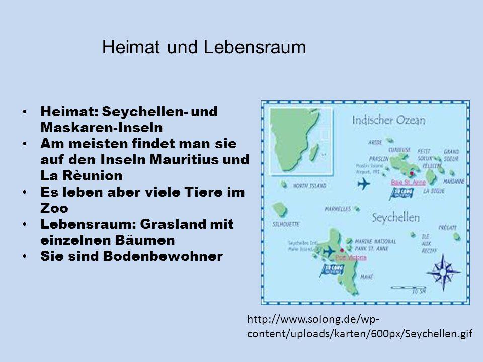 Heimat und Lebensraum Heimat: Seychellen- und Maskaren-Inseln Am meisten findet man sie auf den Inseln Mauritius und La Rèunion Es leben aber viele Ti