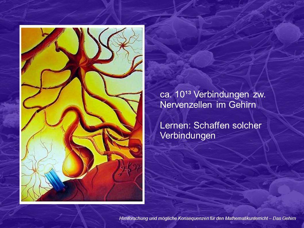 Hirnforschung und mögliche Konsequenzen für den Mathematikunterricht – Das Gehirn ca. 10¹³ Verbindungen zw. Nervenzellen im Gehirn Lernen: Schaffen so