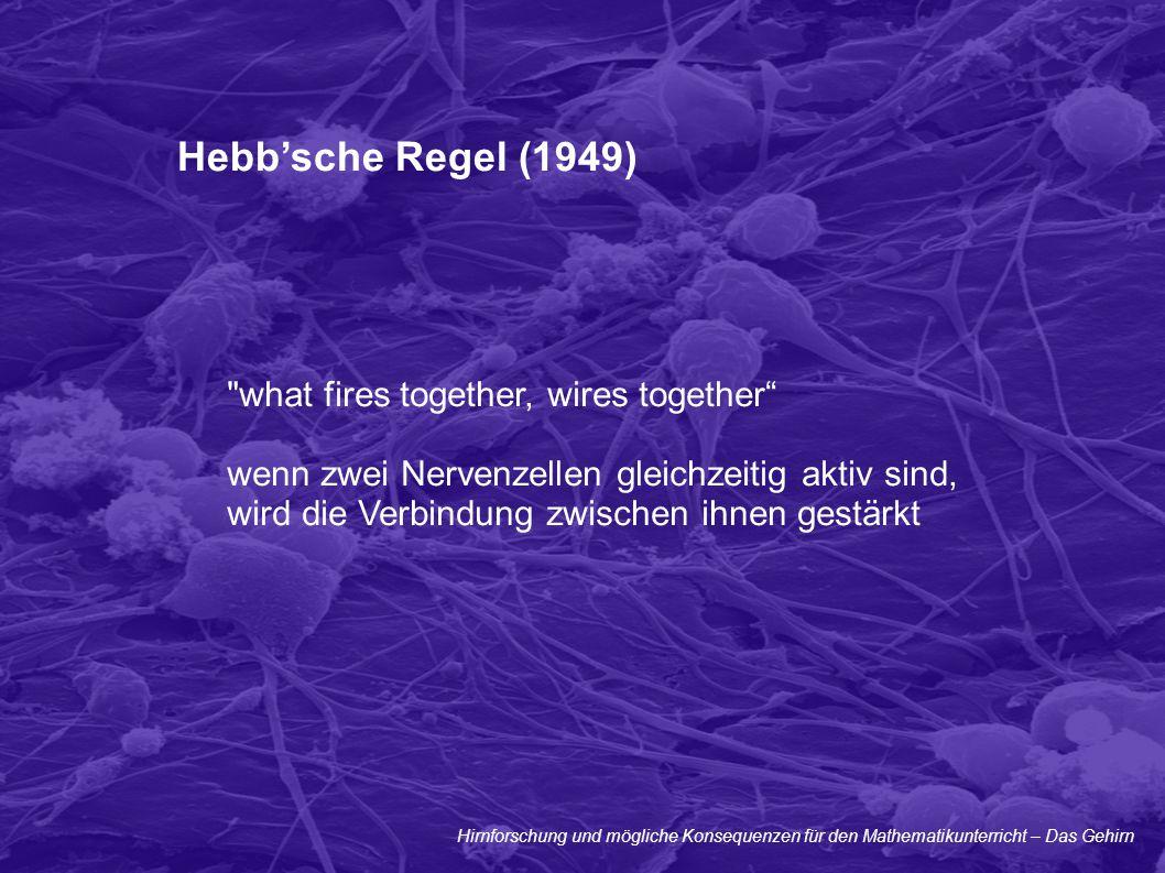 Hirnforschung und mögliche Konsequenzen für den Mathematikunterricht – Das Gehirn Hebb'sche Regel (1949)