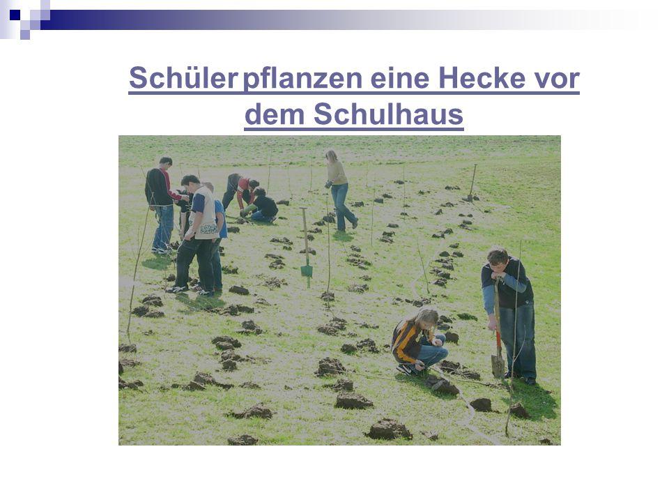 Schüler pflanzen eine Hecke vor dem Schulhaus