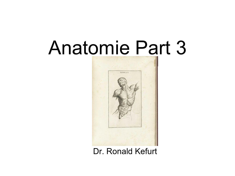 Anatomie Part 3 Dr. Ronald Kefurt
