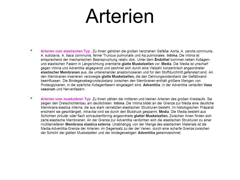 Arterien Arterien vom elastischen Typ. Zu ihnen gehören die großen herznahen Gefäße: Aorta, A. carotis communis, A. subclavia, A. iliaca communis, fer