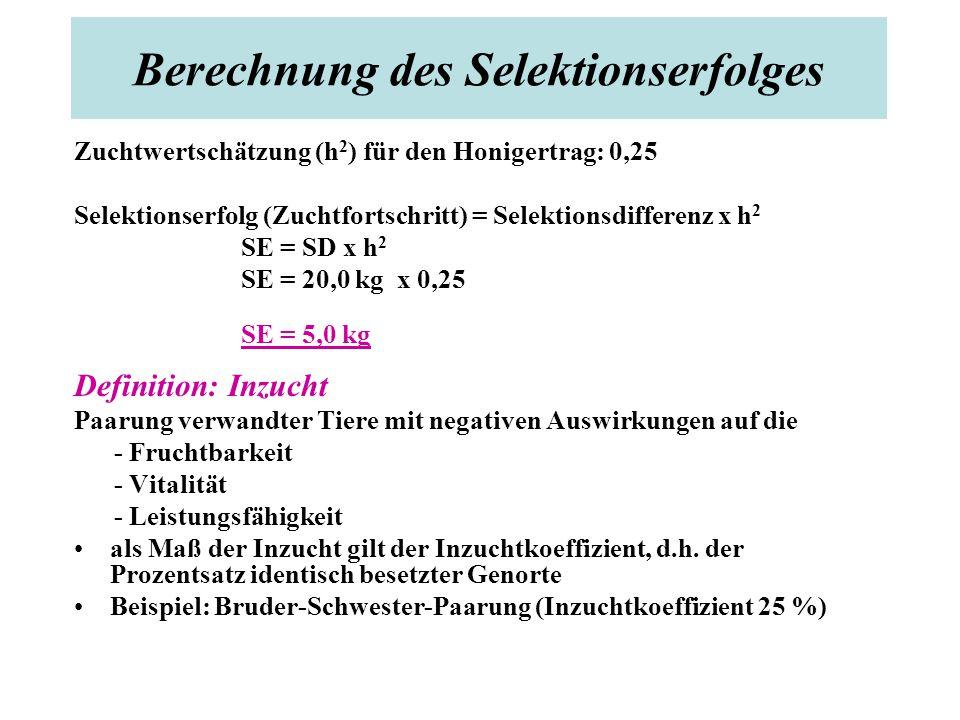 Berechnung des Selektionserfolges Zuchtwertschätzung (h 2 ) für den Honigertrag: 0,25 Selektionserfolg (Zuchtfortschritt) = Selektionsdifferenz x h 2 SE = SD x h 2 SE = 20,0 kg x 0,25 SE = 5,0 kg Definition: Inzucht Paarung verwandter Tiere mit negativen Auswirkungen auf die - Fruchtbarkeit - Vitalität - Leistungsfähigkeit als Maß der Inzucht gilt der Inzuchtkoeffizient, d.h.