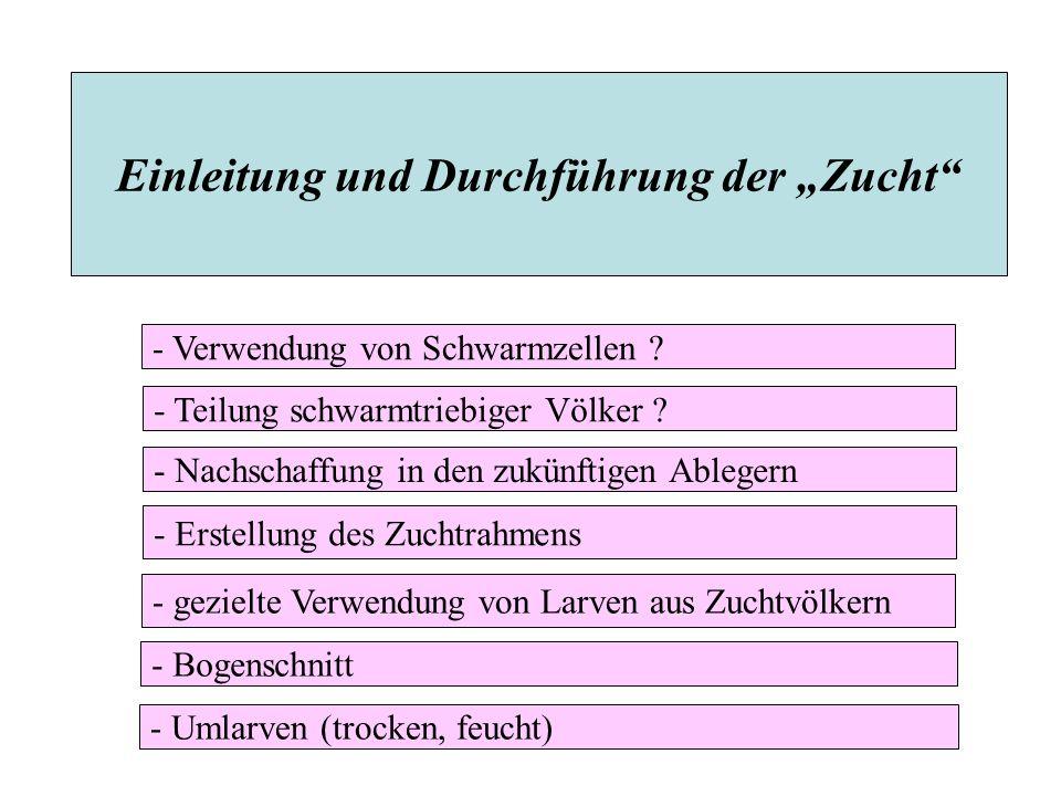 """Einleitung und Durchführung der """"Zucht - Erstellung des Zuchtrahmens - Bogenschnitt - Verwendung von Schwarmzellen ."""