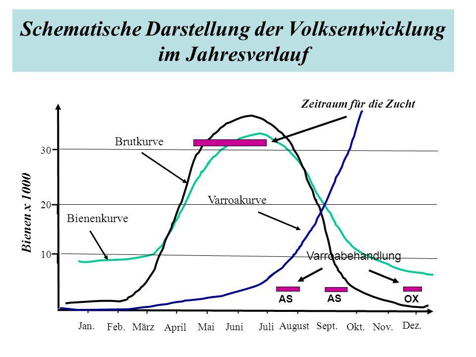 Schematische Darstellung der Volksentwicklung im Jahresverlauf ⌐⌐ ⌐⌐ ⌐⌐ ⌐ AS ⌐⌐ ⌐ Jan.