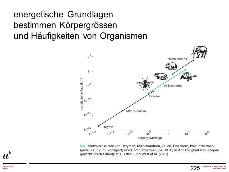 225 energetische Grundlagen bestimmen Körpergrössen und Häufigkeiten von Organismen