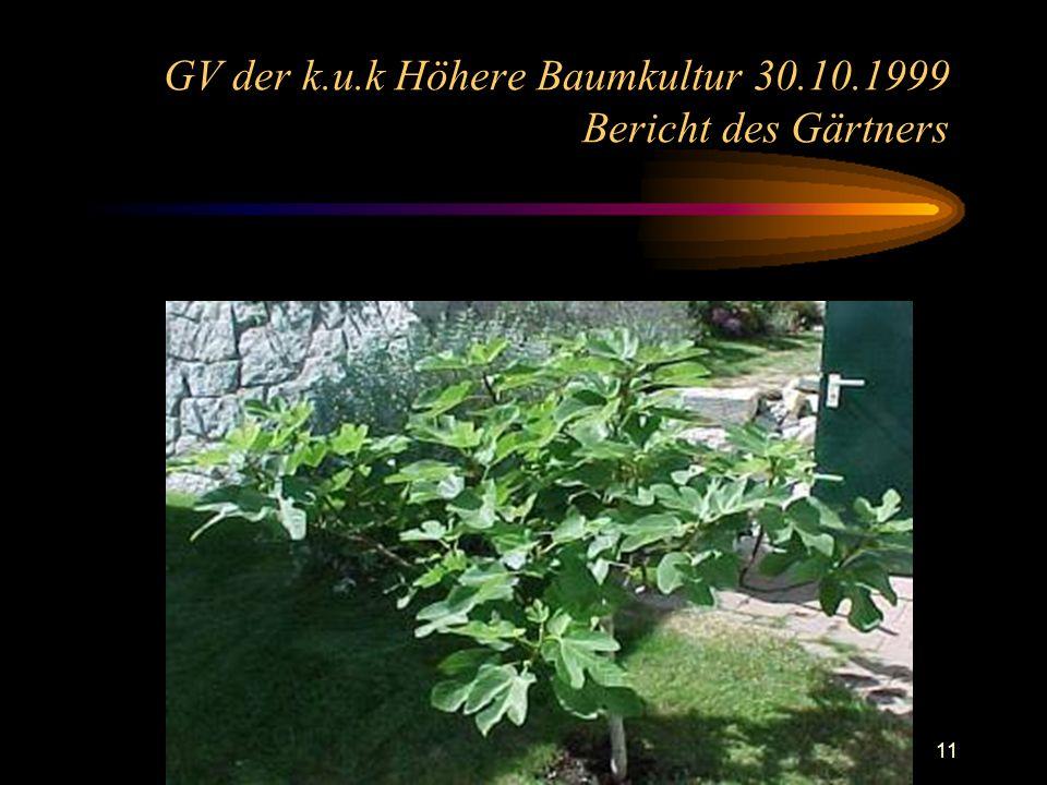11 GV der k.u.k Höhere Baumkultur 30.10.1999 Bericht des Gärtners
